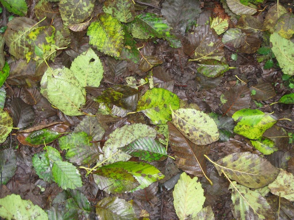 november-2010-falling-water-050-1024x768