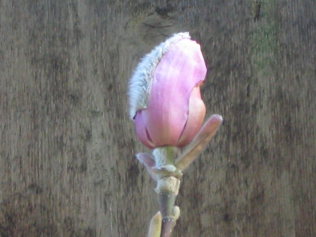 may-magnolia-2011-017-12-1024x768