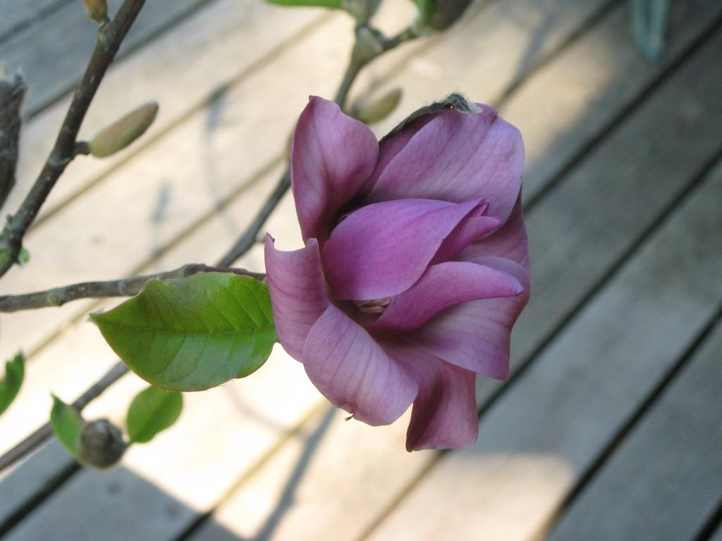 may-magnolia-2011-017-28-1024x768