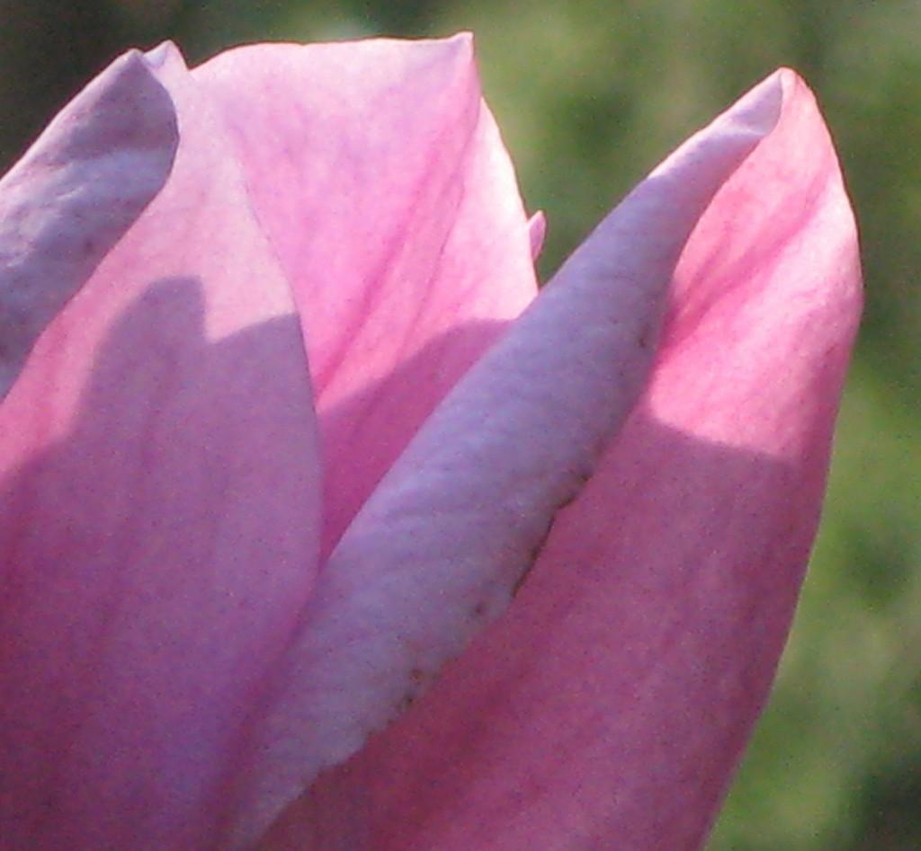 may-magnolia-wow-20-1024x947