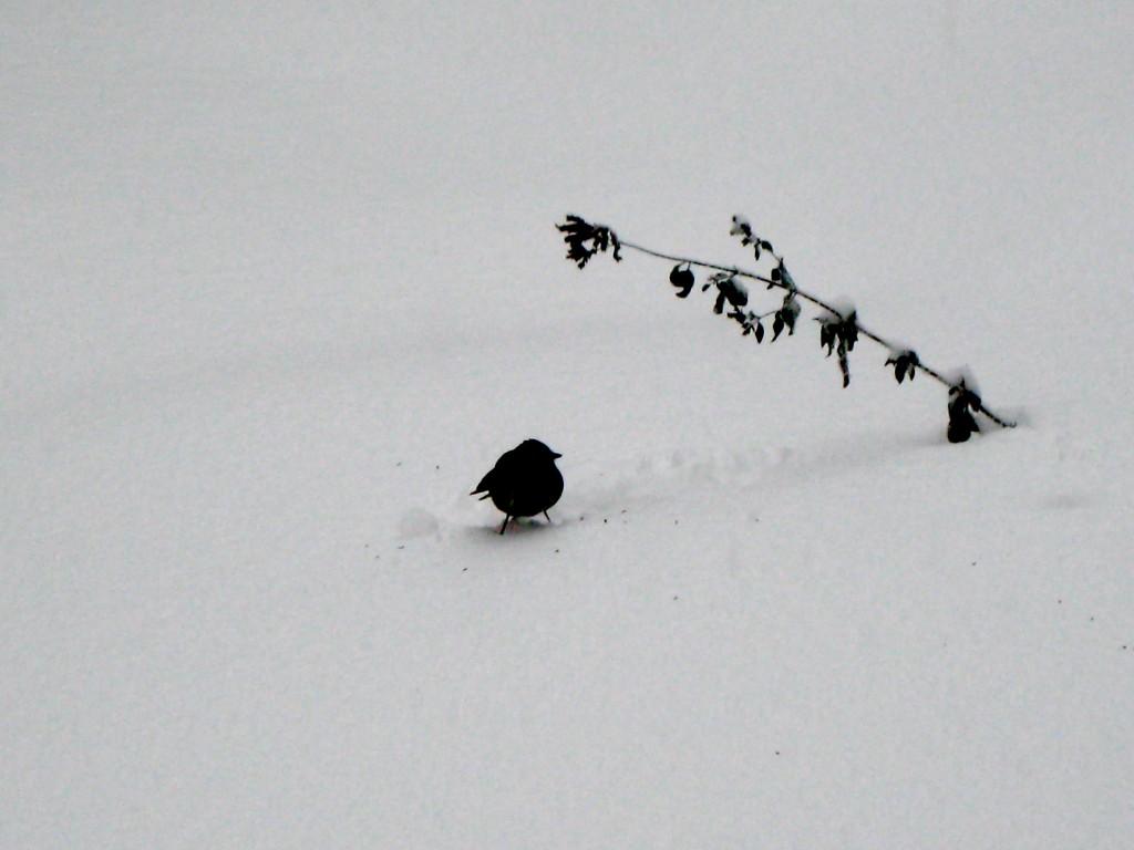snow-bird-1-1024x768
