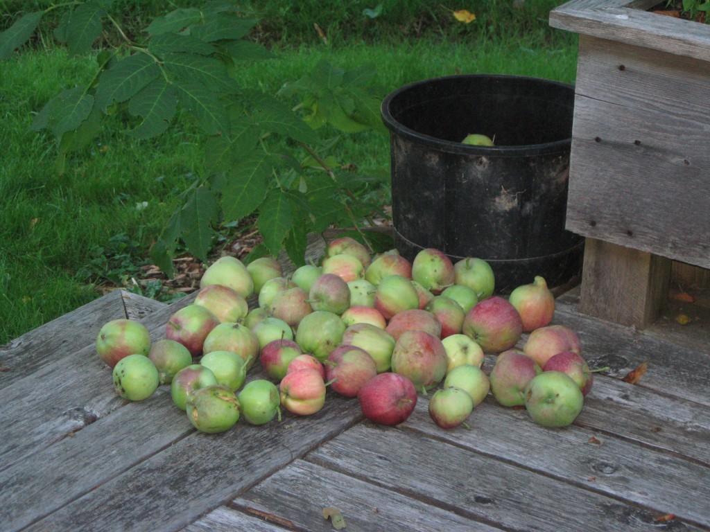 summer-harvest-august-2011-025-1024x768