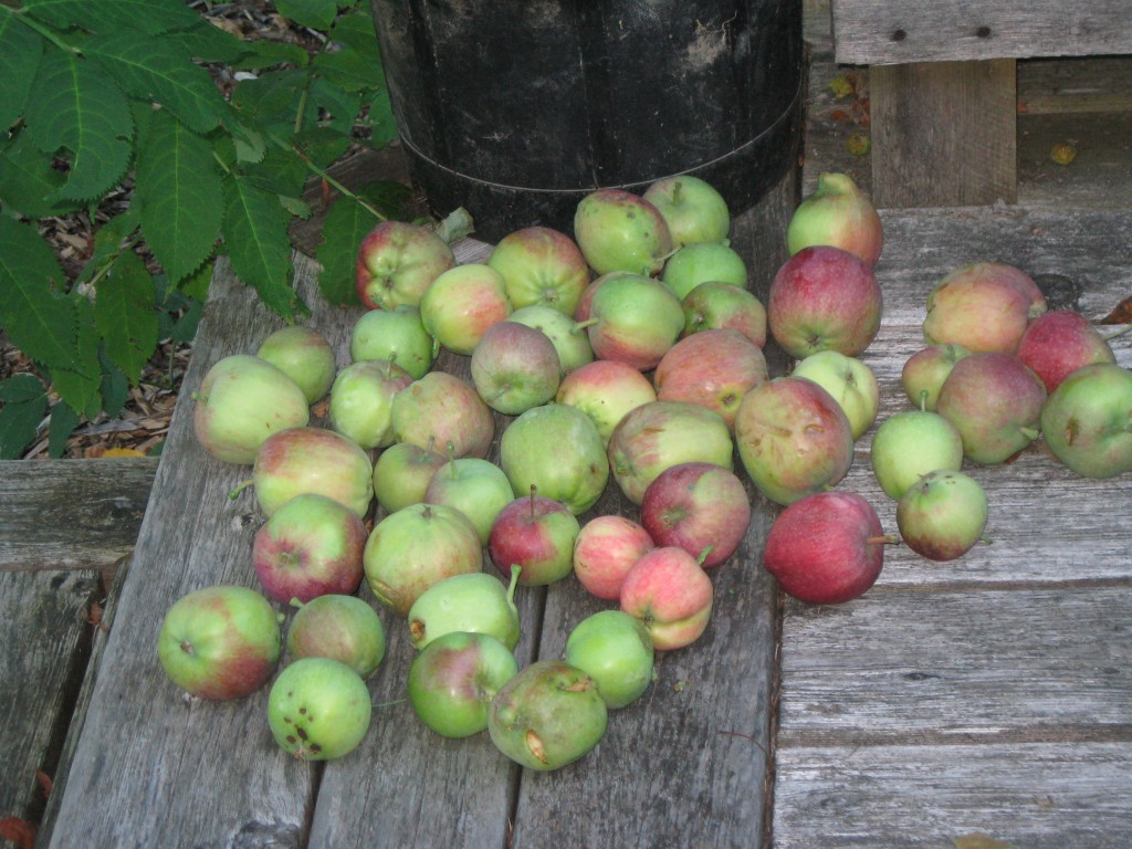 summer-harvest-august-2011-026-1024x768